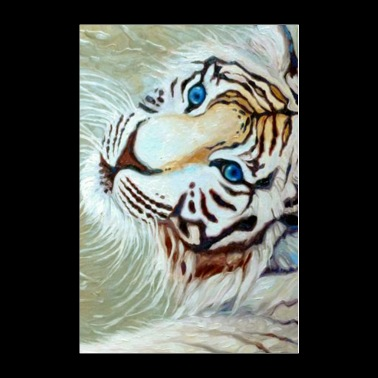 blue eyed white tiger on silver - Poster 24x36