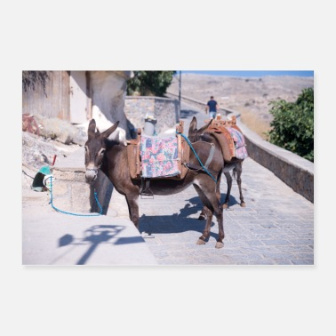 Greece Donkey Lindos Greece - Poster