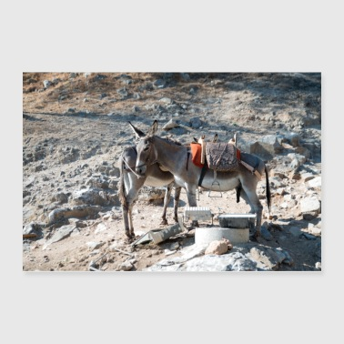 Greece Donkey Lindos Greece II - Poster 36x24