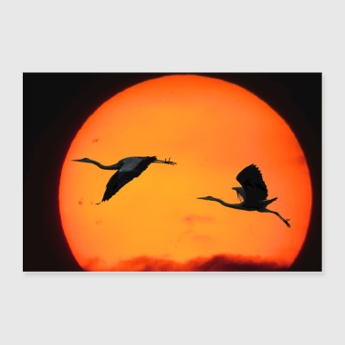 Birds Sunset Nature - Poster 36x24