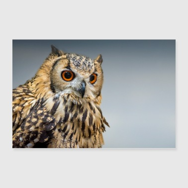 Long Eared Owl - Poster 36x24