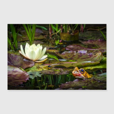 A Toad and the Water Lily - Poster 36x24
