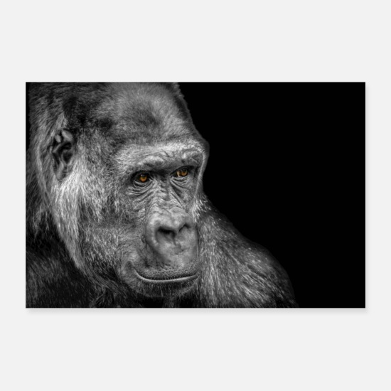 Black And White Posters - A Gorilla - Posters white