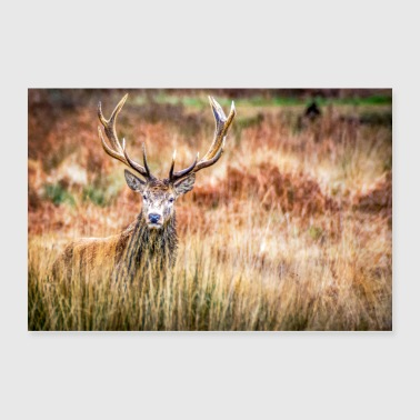 Stag - Poster 36x24