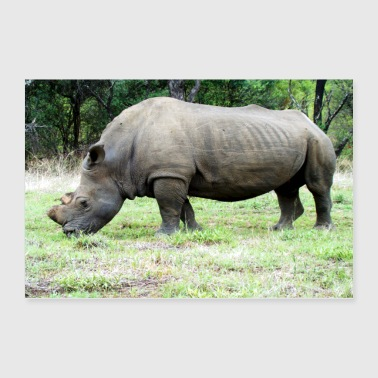 Grass A rhino grazes peacefully - Poster 36x24