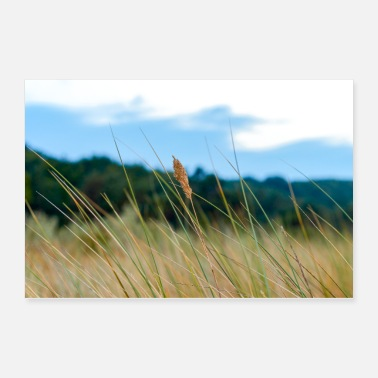 Grass Blade of grass in the dunes - Poster