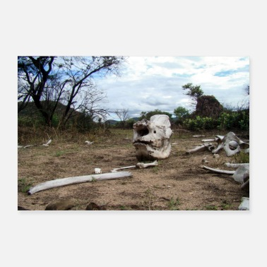 Illegal Bones of an illegally killed rhinoceros - Poster