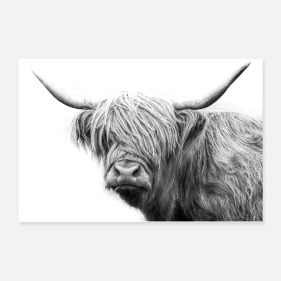 Cow Posters - Highland cattle Scotland cow - Posters white