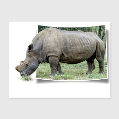 A rhino look out of a photo and grazes peacefully - Poster 24x18