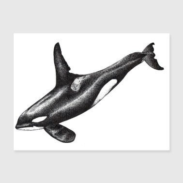 Orca killer whale ink drawing artwork - Poster 24x18