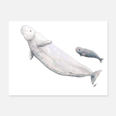 Beluga whale and calf - Poster
