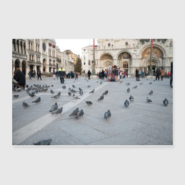 Venice pigeons - Poster 12x8