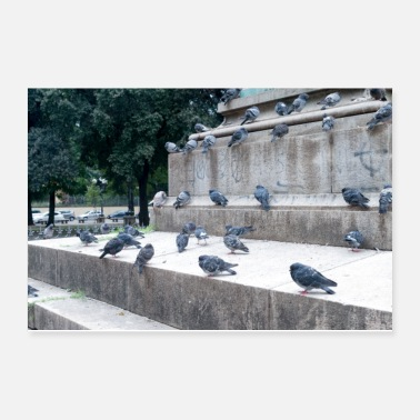 Tuscany Pigeons of Florence Italy II - Poster