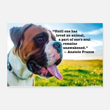 Nature Poster - Until one has loved an animal - Poster
