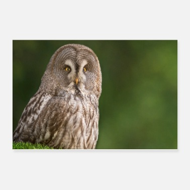 Nocturnal Bird Great Owl - Poster