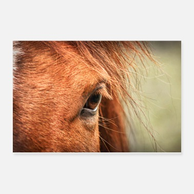 Equitation Soul Window - Poster