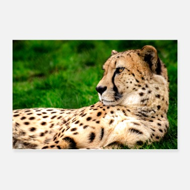 Animal Cheetah Portrait - Poster 12x8