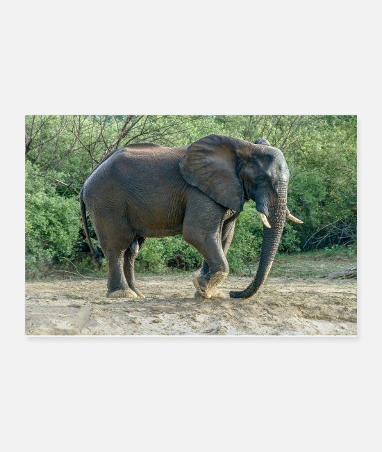 Mammal Posters - Elephant stomp with his foot in the sand - Posters white