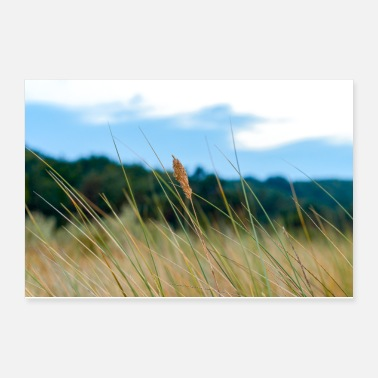 Baltic Sea Blade of grass in the dunes - Poster