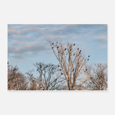 Group A group of cormorants snaps to trees on the river - Poster