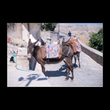 Donkey Lindos Greece - Poster 12x8