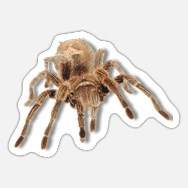 Large large tarantula - Sticker