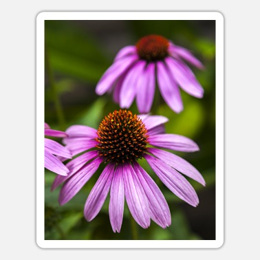 Samsung-cases Echinacea Phone Case, Flower Phone Case, Floral, - Sticker