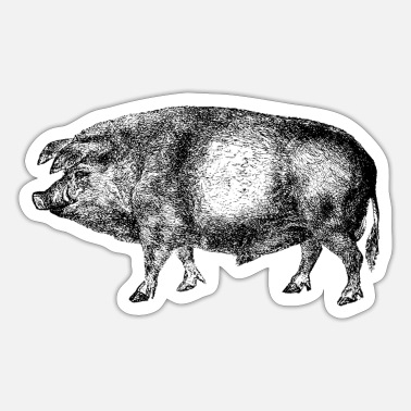 Sow Pig Swine Hog Boar Sow - Sticker