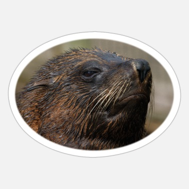 South American South American Sea Lion - Sticker