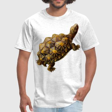 prehistoric turtle - Men's T-Shirt