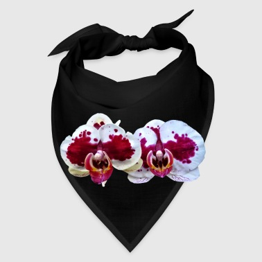 Maroon And White Phalaenopsis Orchids Side By Side - Bandana