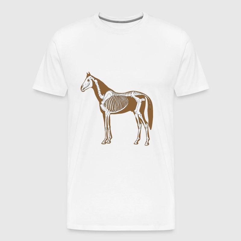 Famous Horse Skeleton Anatomy Model - Anatomy Ideas - yunoki.info