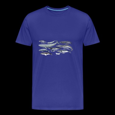 Whale diversity -blue, right, humpback whales - Men's Premium T-Shirt
