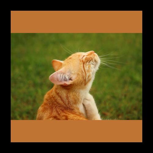 Cute Yellow Kitty Cat - Poster 24x24