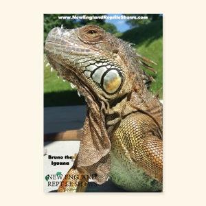 Bruno the Iguana - Poster 8x12