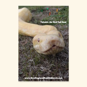 Twinkie The Red Tail Boa - Poster 8x12