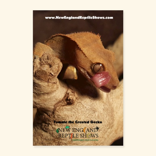 Tomale the Crested Gecko - Poster 8x12