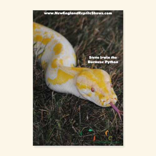 Steve Irwin the Burmese Python - Poster 8x12
