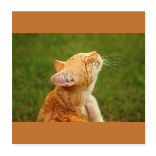 Cute Yellow Kitty Cat - Poster 8x8