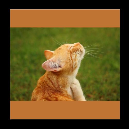 Cute Yellow Kitty Cat - Poster 8x8