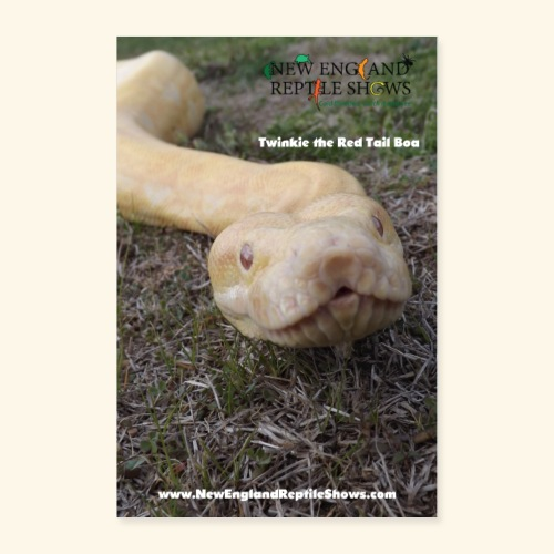 Twinkie The Red Tail Boa - Poster 24x36