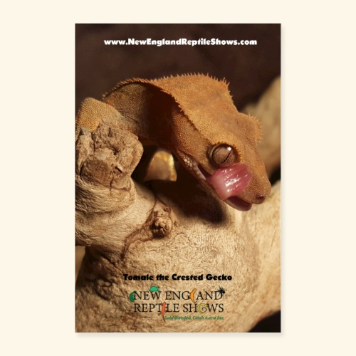 Tomale the Crested Gecko - Poster 24x36