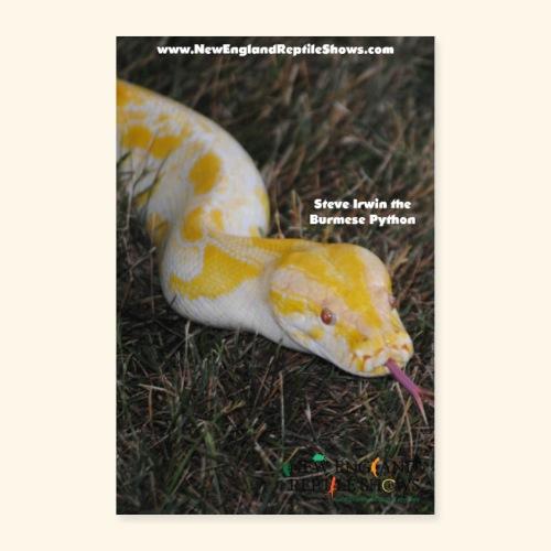Steve Irwin the Burmese Python - Poster 24x36