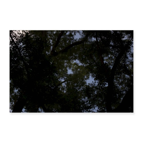 Tree Sky Poster - Poster 36x24