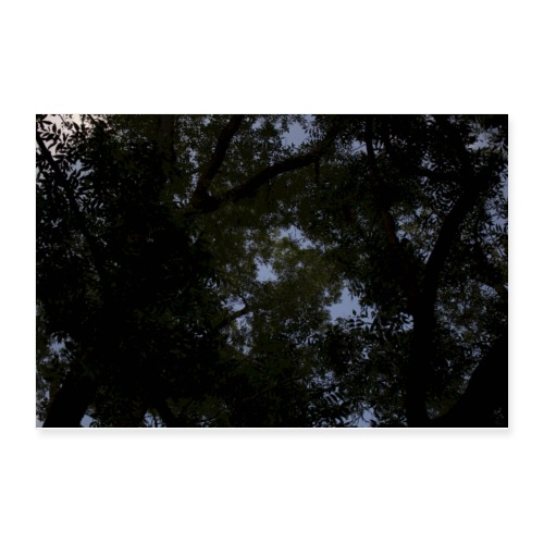 Tree Sky Poster - Poster 12x8