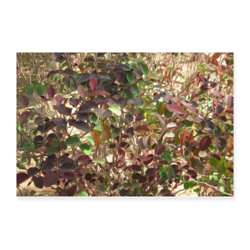 Beautiful Leaves - Poster 12x8