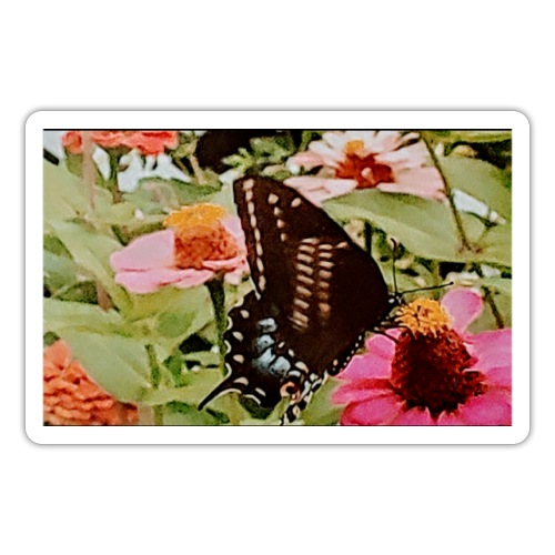 Butterflies are free to fly - Sticker