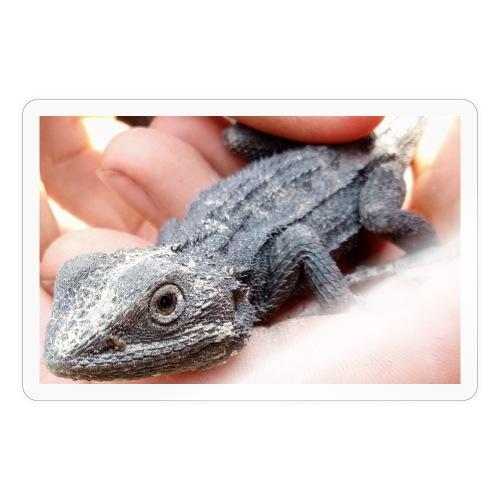 Australian lizard - Sticker
