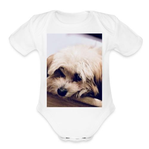 5551638F BBF7 4C09 8B18 9DF2576622F9 - Organic Short Sleeve Baby Bodysuit