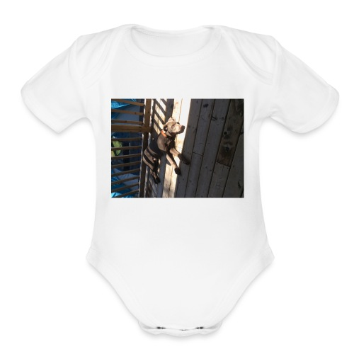Finn on Deck - Organic Short Sleeve Baby Bodysuit